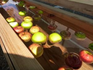 手のひらサイズで傷があったりと食べられないリンゴですがこんなところで大活躍!